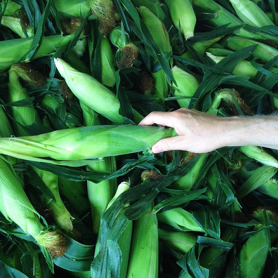 Eugster's fresh sweet corn